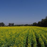 Oxnard Farming, Окснард