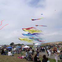 Kite Fair, Олбани