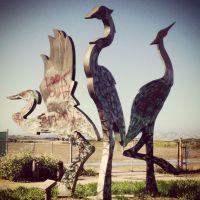 Crazy Birds, Олбани