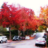 Mc Gee Ave, Berkeley, Олбани