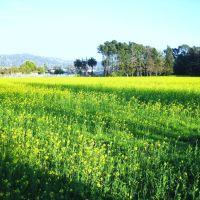 Gilltract Farm, Олбани