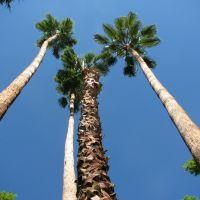 Palm Springs, Палм-Спрингс