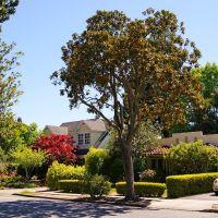 Middlefield Road, Palo Alto, Пало-Альто