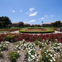 Stanford University, California, Пало-Альто