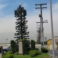Green Cell Tower at Alondra, Парамоунт