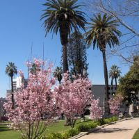 Memorial Park, Пасадена