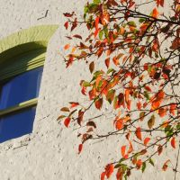 Fall Colors agains wall and a window, Petaluma, California, Петалума