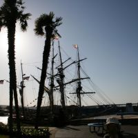 Tall Ships shadowed by Palm Trees, Редвуд-Сити