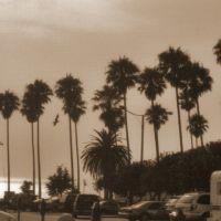 Sepia Palms, Редондо-Бич
