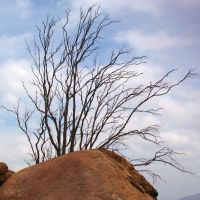 Tree and Rock, Mt. Rubidoux, Риверсайд
