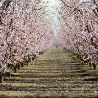 blossom trail in fresno, Ридли