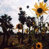 Mt. Vernon Wildflowers, Сан-Бернардино