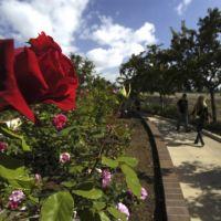 Balboa Park Rose Garden, Сан-Диего