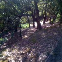 Arguello Park Trail, Сан-Карлос