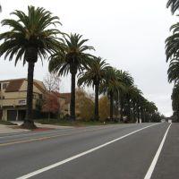 California BLVD-Palm lined street, Сан-Луис-Обиспо