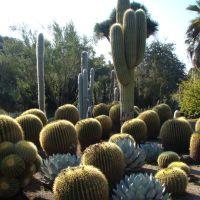 Desert Garden in Huntington Library, Сан-Марино