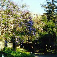 美国加州理工学院(Caltech, Pasadena, USA), Сан-Марино