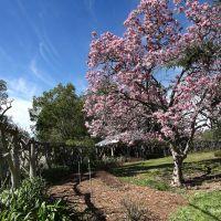 Huntington Botanical Gardens, Сан-Марино