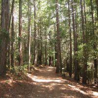 Huddart County Park, Сан-Матео