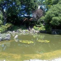 Japanese Tea Garden, San Mateo, CA, Сан-Матео