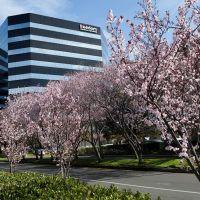 Crossroads center cherry bloom, Сан-Матео