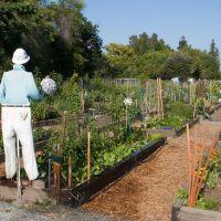 Charles Street Community Garden, Саннивейл