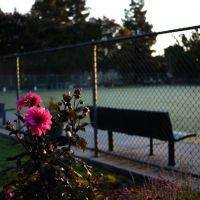 Lawn bowling green, Саннивейл