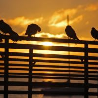 Morning Birds, Санта-Барбара