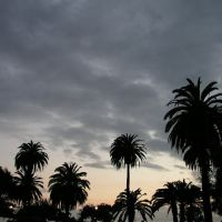 Palm Tree Silhouette, Santa Monica, Санта-Моника