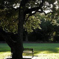 Edie Park at Sunset, Саут-Пасадена