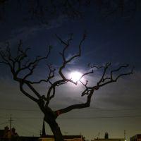 Artesia Park Silhouette, Серритос