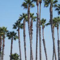 Palms, Сил-Бич