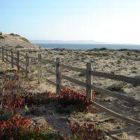 Monterey Bay, Сисайд