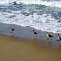 Monterey, Сисайд