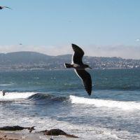 10-15-03 Monterey, Сисайд