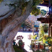 kawiarnia, Сусалито