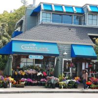 Nancy Anns Flowers, Sausalito, Marin, California, Сусалито