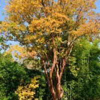 秋の色, Сьерра-Мадре