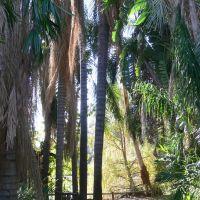 The Arboretum of Los Angeles County, California, Сьерра-Мадре