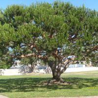 끌리는 나무, Торранц