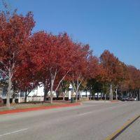 Torrance CA en otoño, Торранц