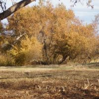 Fall Colors, Торранц