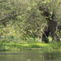 Black Willows, Торранц