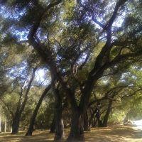 Descanso Gardens, CA, Флинтридж