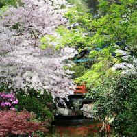 Cherry Blossoms, Флинтридж