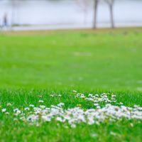wild flowers, Фремонт