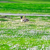 wild birds, Фремонт