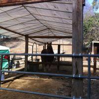 Big horse, Фуллертон