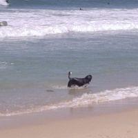 Dog Beach, Хантингтон-Бич