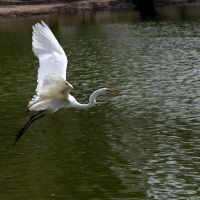 White Egret Took Flight, Хантингтон-Бич